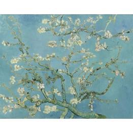 Çiçek Açan Badem Ağacı
